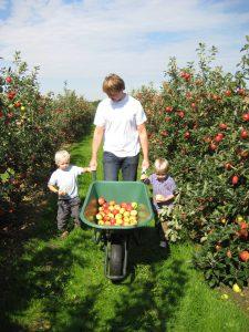 Fruitplukken_VinkFruitboerderij