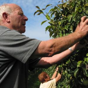 Oude Bomen Plukken Vink Fruit
