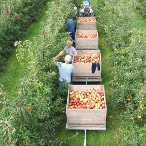 Vink Fruit oude bomen plukken in trein